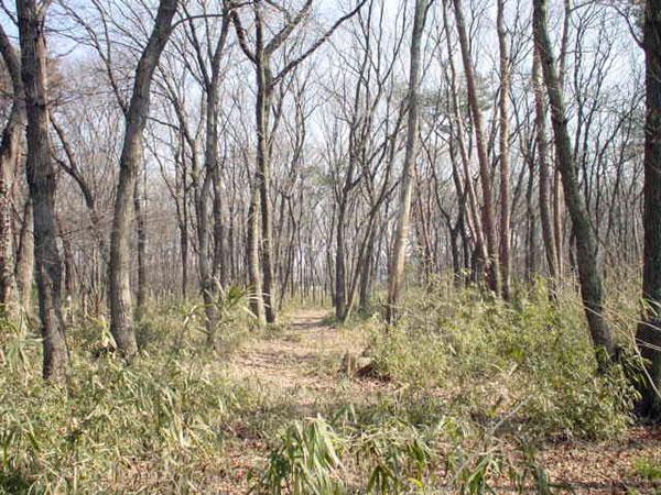 三芳町役場前の雑木林