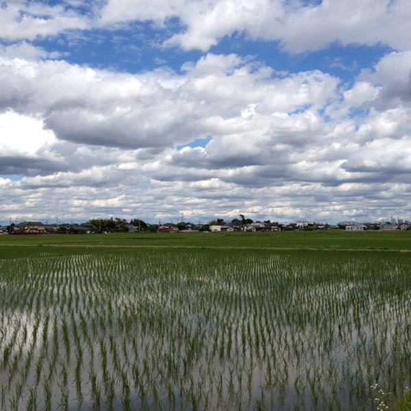 川越郊外の野鳥観察スポット