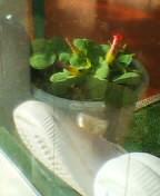 幼稚園の靴箱
