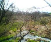 自宅近くの沼沢地
