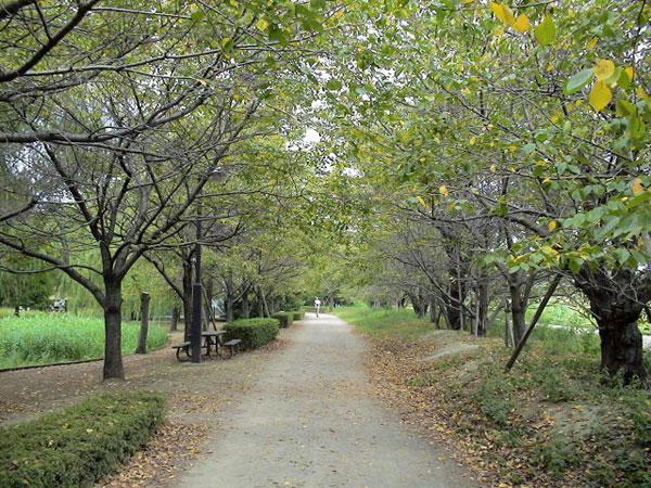 初秋の三橋総合公園を散歩