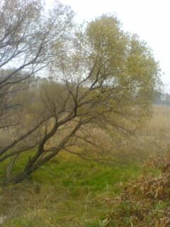冬の始まり、沼地に枯れ草が目立ち始めた