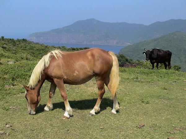 牧畜が盛んな隠岐・西ノ島へ