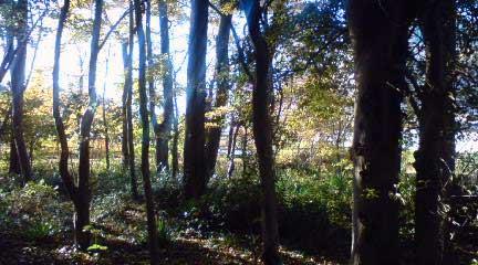 雑木林の中のカフェ「温々」@さいたま・丸ヶ崎