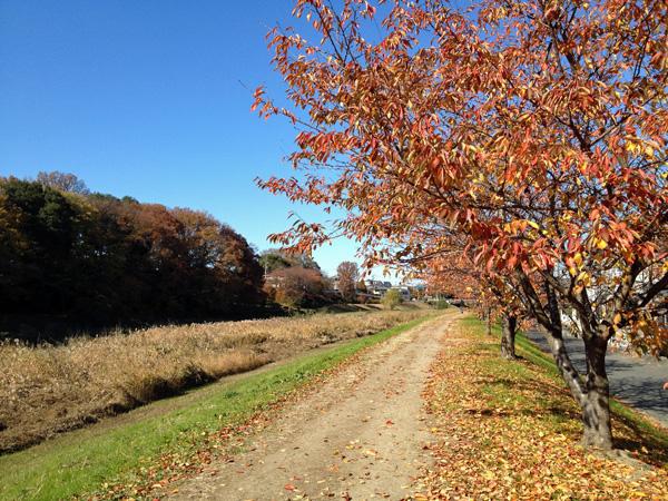 晩秋の新河岸川、川辺をお散歩