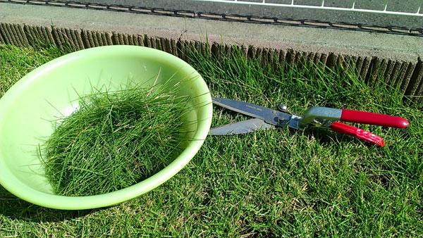 縁石近くの芝生をハサミで刈り込む
