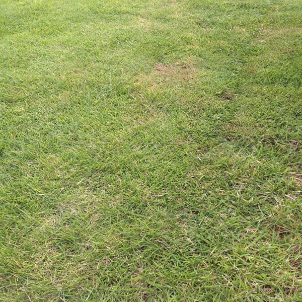 四週間ぶりに庭の芝生の整備をした