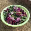 本格的な冬に備えて花壇と芝生の整備を