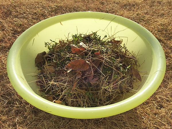芝生の冬雑草駆除