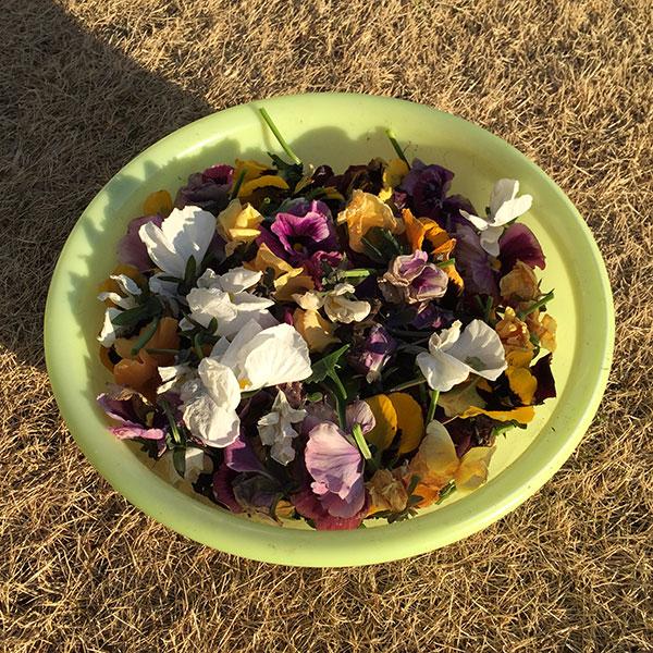 ひと月ぶりに芝生と花壇のメンテナンスを