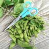 枝豆を収穫、1時間後に食卓へ