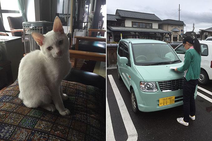 猫とレンタカー(遠野)