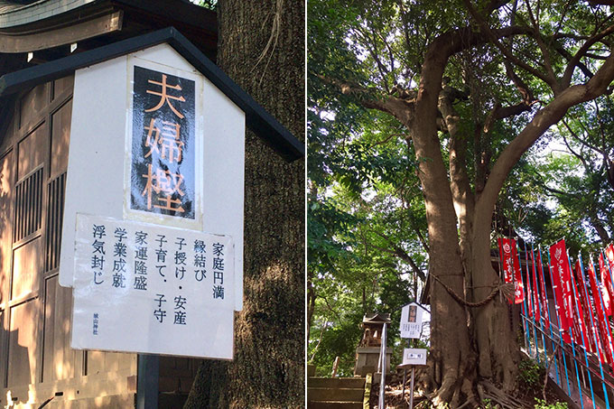城山神社夫婦樫・滝の城跡(所沢)