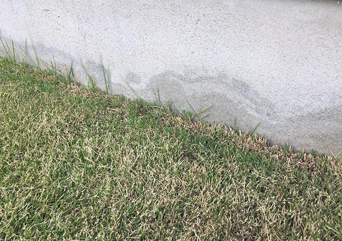 芝生の際の刈り込み