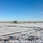 関東地方、54年ぶりの11月の積雪
