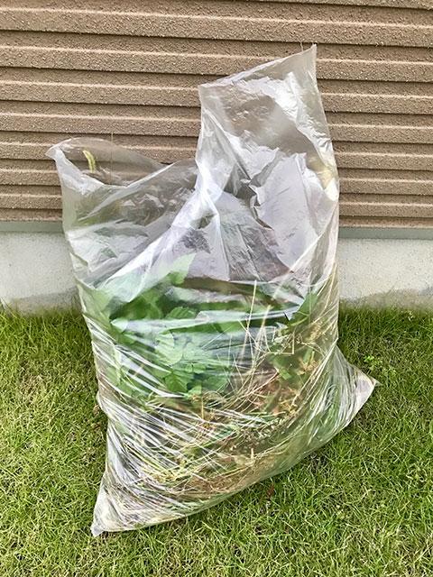 花壇の草むしり