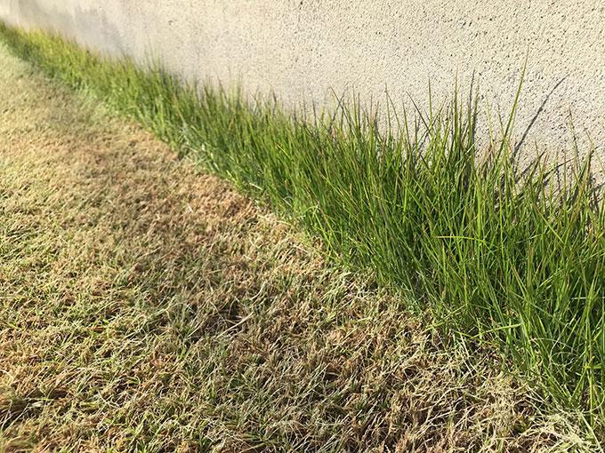 エッジの芝刈り