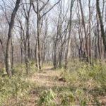 三芳町の雑木林