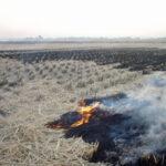 田を焼く風景