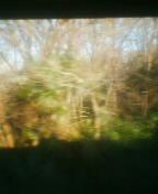 雑木林を通過