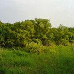 青々と茂る沼