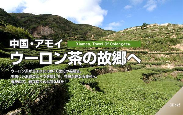 中国・アモイ ウーロン茶の故郷へ