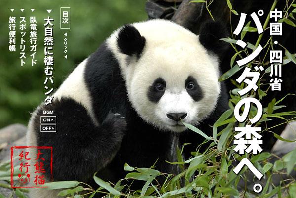 中国・四川省 パンダの森へ