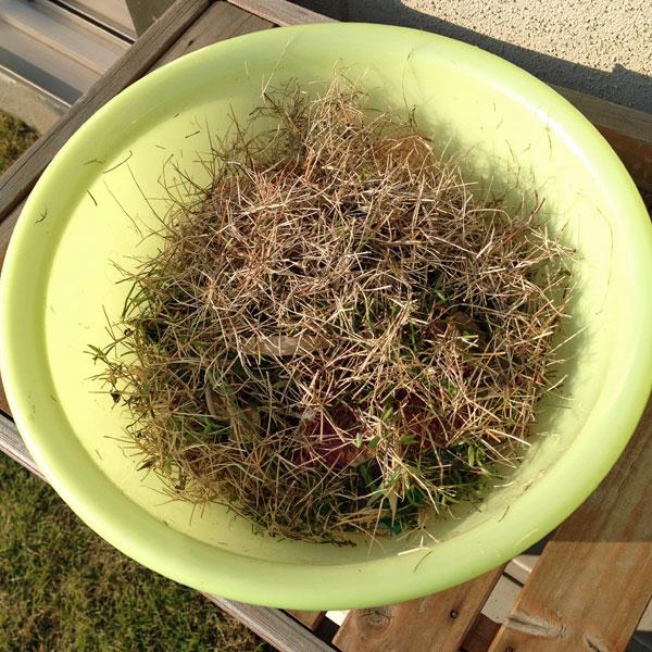 冬雑草の駆除