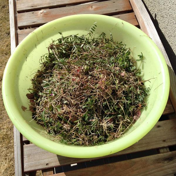 雑草の駆除