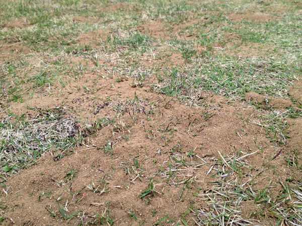 砂場のようになった芝生