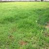 梅雨の芝生