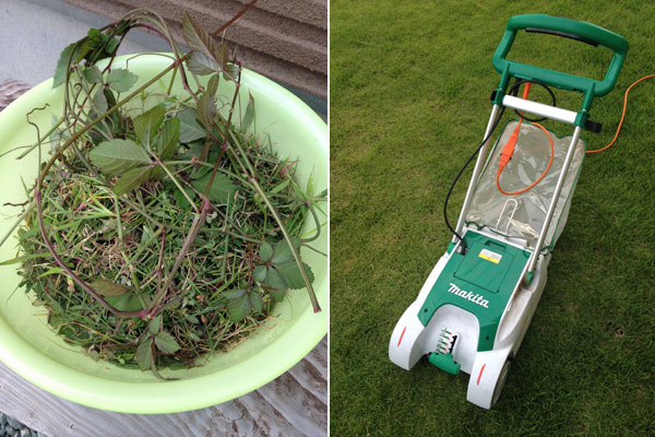芝生の整備