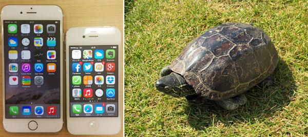 iPhone6とカメ