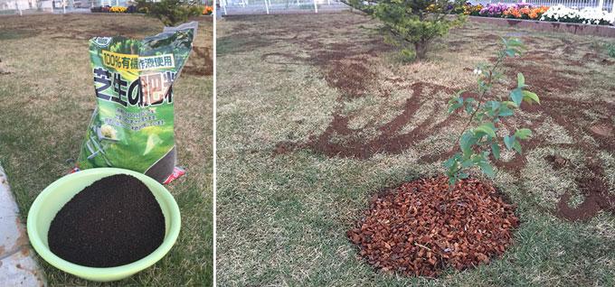 芝生の肥料撒き
