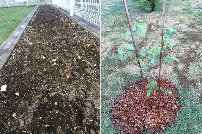 花壇とブルーベリーの木