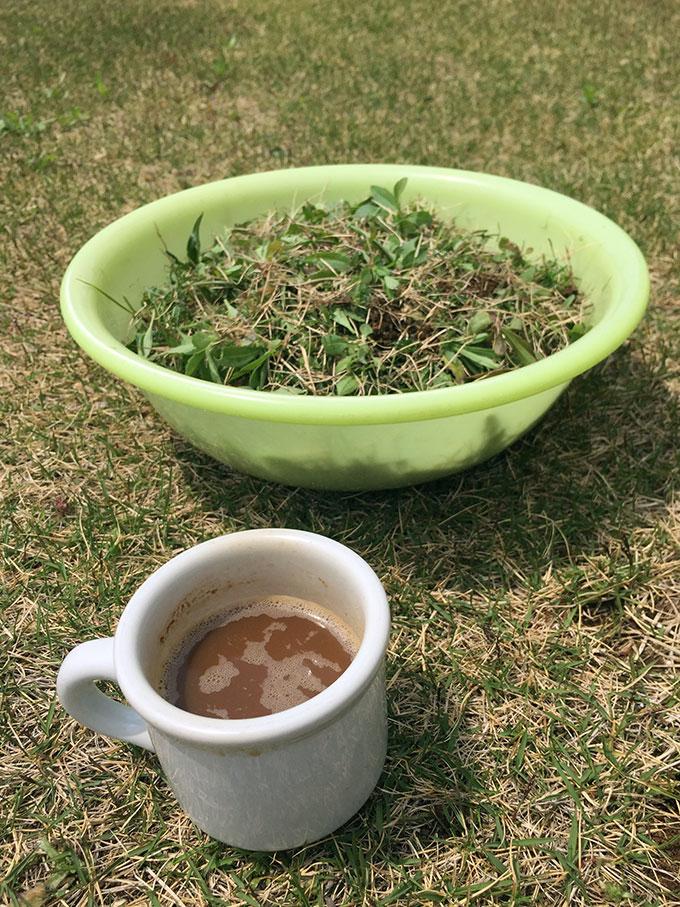 芝生の草むしり