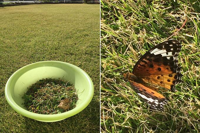 芝生と蝶々