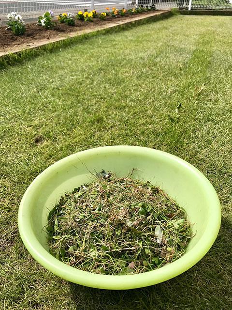 芝生・草むしり