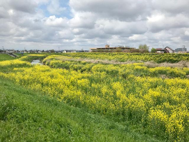 春の新河岸川