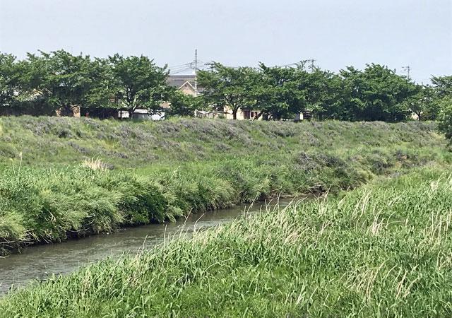 新河岸川の土手