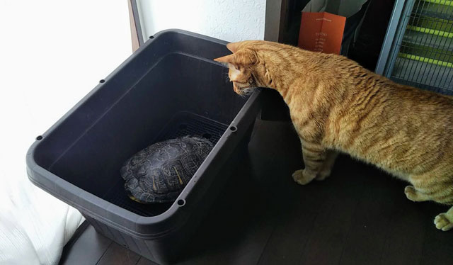 カメとネコ