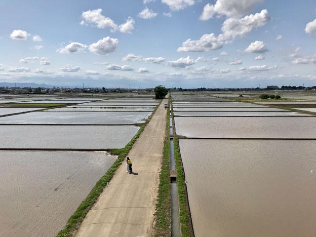 水入れ時期の川越市古谷本郷