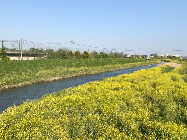 新河岸川・扇河岸
