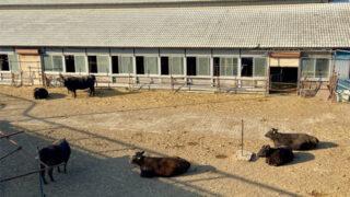 いるまがわ大橋近くの畜産農家
