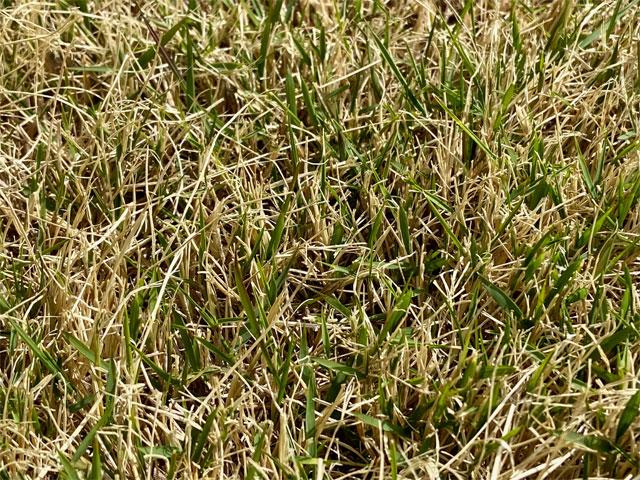 早春の芝生
