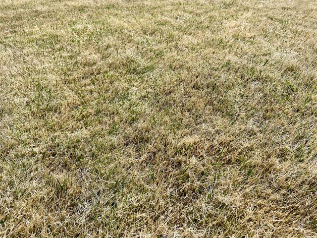 除草剤を撒いた芝生