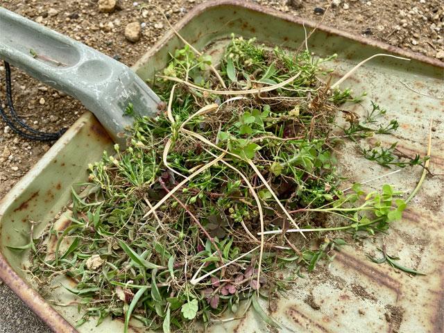 花壇の雑草の駆除
