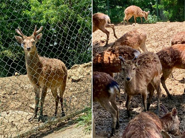 おがの鹿公園(小鹿野町)