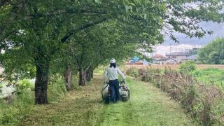 新河岸川の雑草刈払い